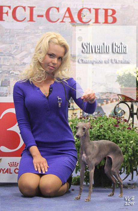 левретка Silvento Gaia выставка львов