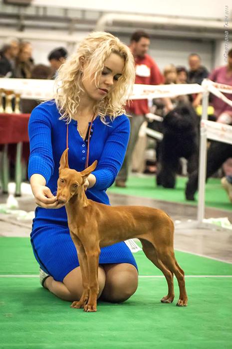 щенок чирнеко Киев выставка - 3,5 месяцев на фото