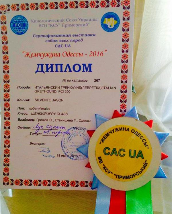 Левретка Одесса выставка