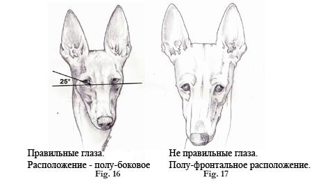 Чирнеко - глаза и расположение. Перевод - Стахорская А.
