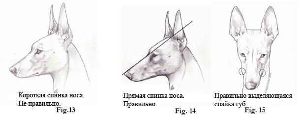 Чирнеко - морда и губы. Перевод - Стахорская А.