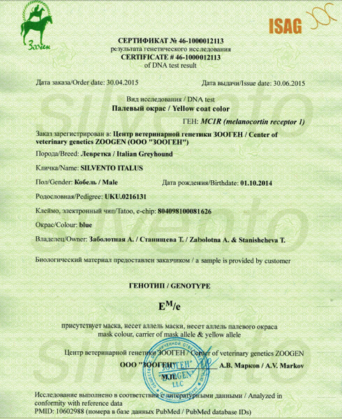 генетика окрасов собак сертификат