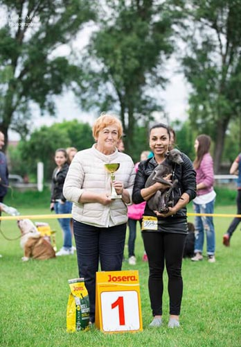 first dog show for italian greyhound Silvento Kronos