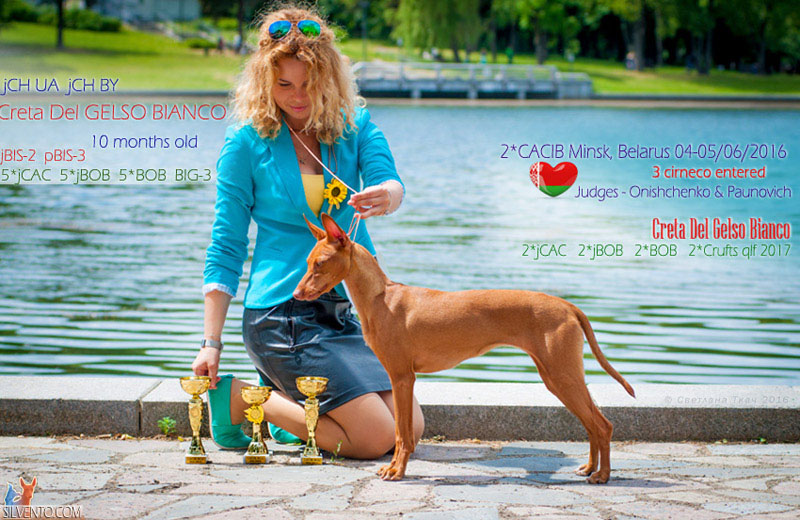 cirneco dell'etna Minsk dog-show Chanpion