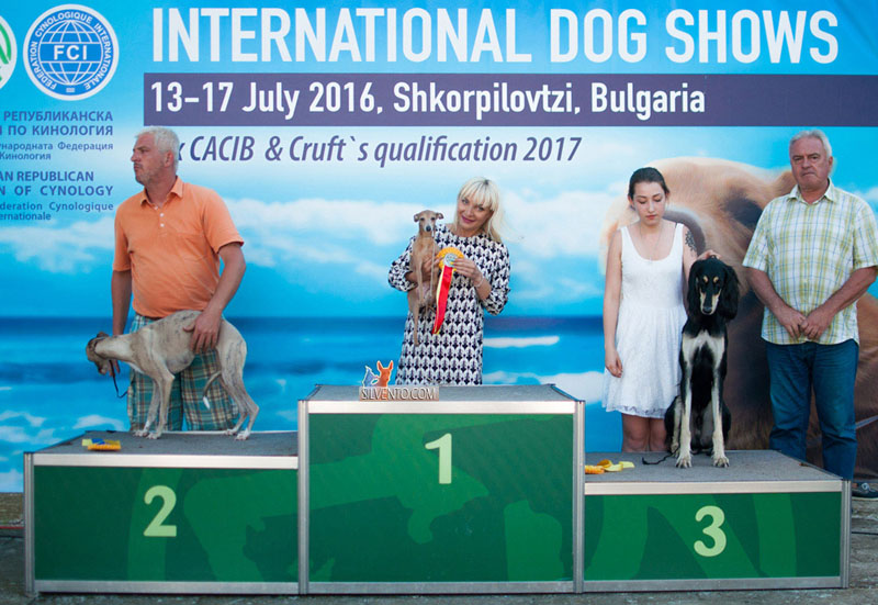 Bulgaria italian greyhound with the expert Dragan Janjiv (Serbia)