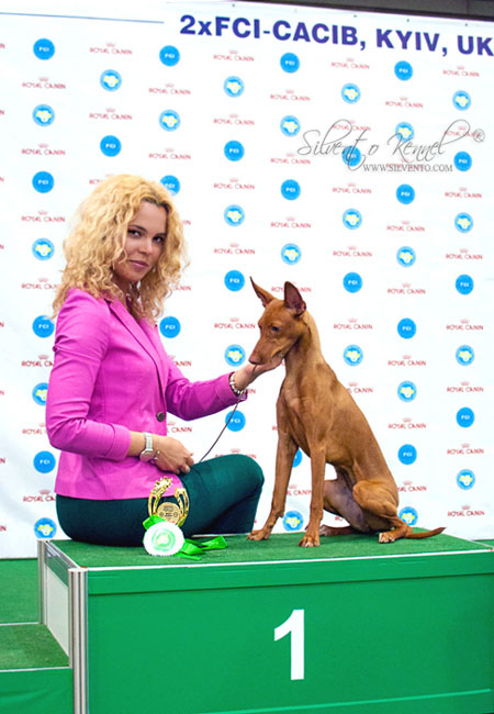 Cirneco & Italian sighthound judged by Andras Korozs & Denis Kuzelj at CACIB, Ukraine