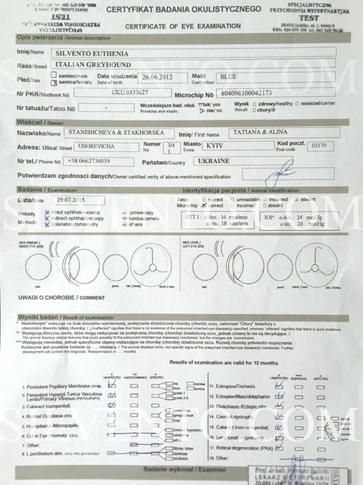 ESVO eye test certificate of Italian greyhound Silvento Euthenia