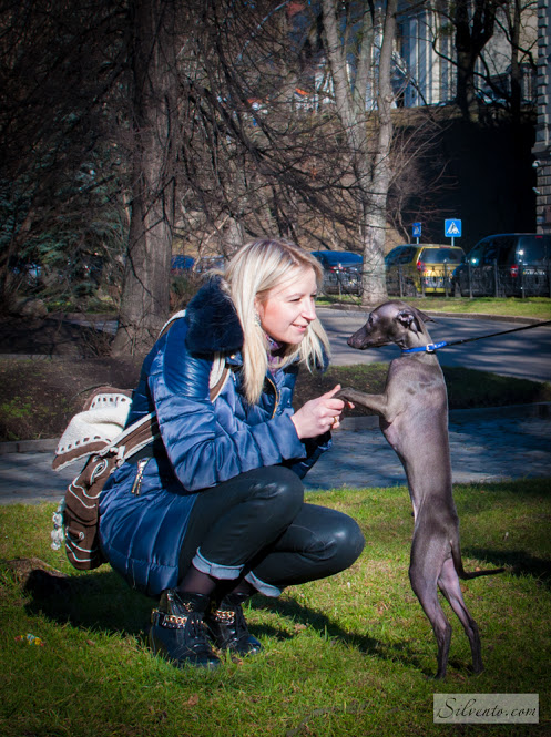 Бронзовая левретка - генетика окраса собак