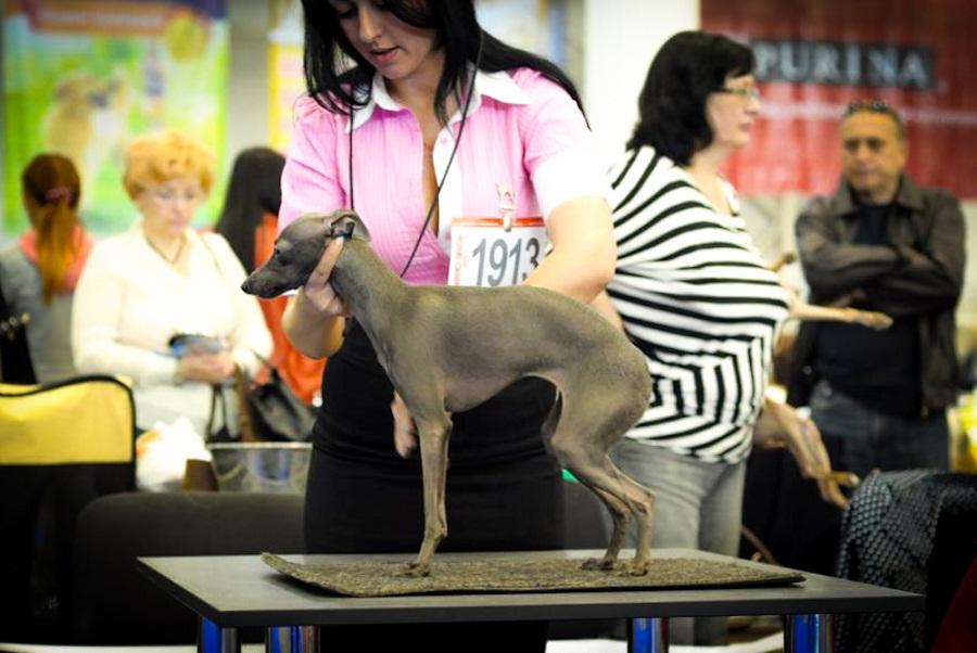 Silvento Euthenia выставка собак