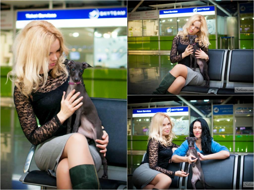 Аэропорт - левретка Сильвенто Илифия перед полётом с Алиной и Татьяной