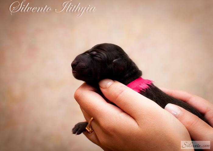 Silvento Ilithyia newborn