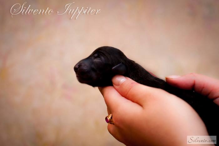 Silvento Iuppiter newborn
