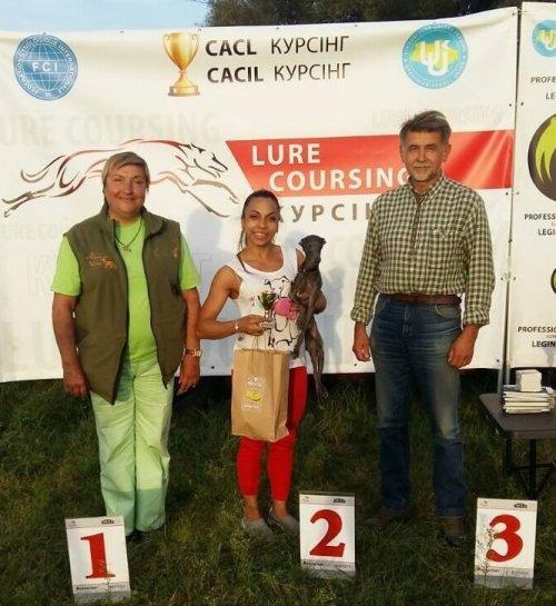 Курсинг левретка Silvento Kronos кандидат в чемпионы по Курсингу