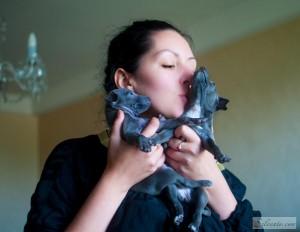 Italian greyhound kiss. Glaucus and Galatea