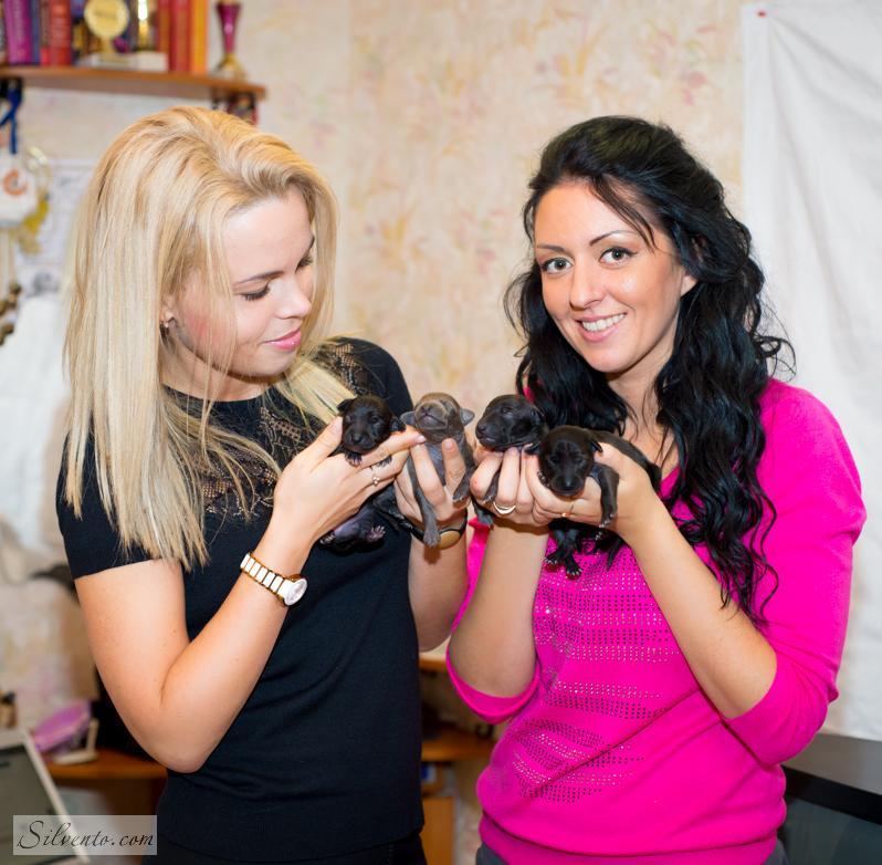 Левретка щенки-Киев, Алина и Татьяна